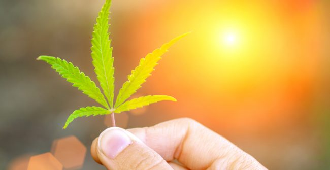 5 Componenets of Cannabis You Need to Know