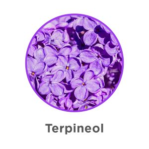What are Terpenes? | Aphria 5