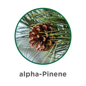 What are Terpenes?   Aphria 5