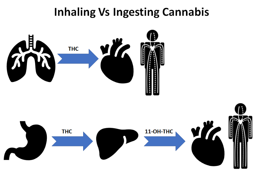 Inhaling cannabis vs. ingesting cannabis effects on lungs, liver, stomach and heart